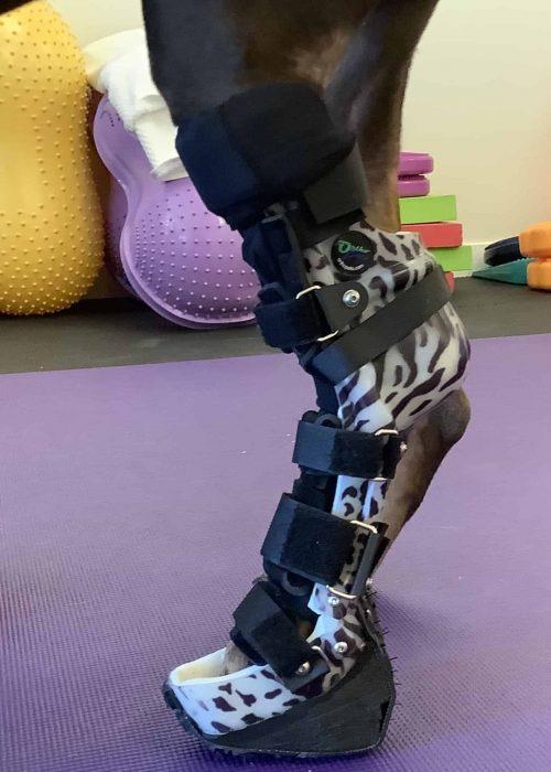 Dog Knee Brace Boulder