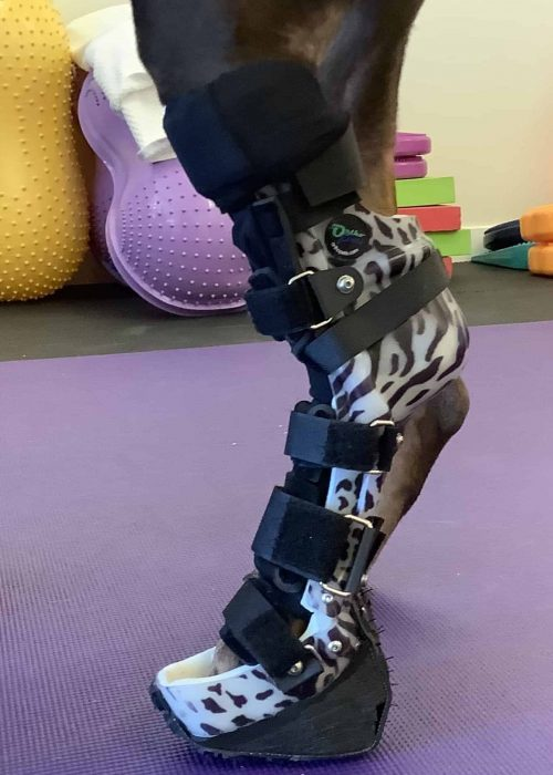 Dog Ankle Brace Boulder