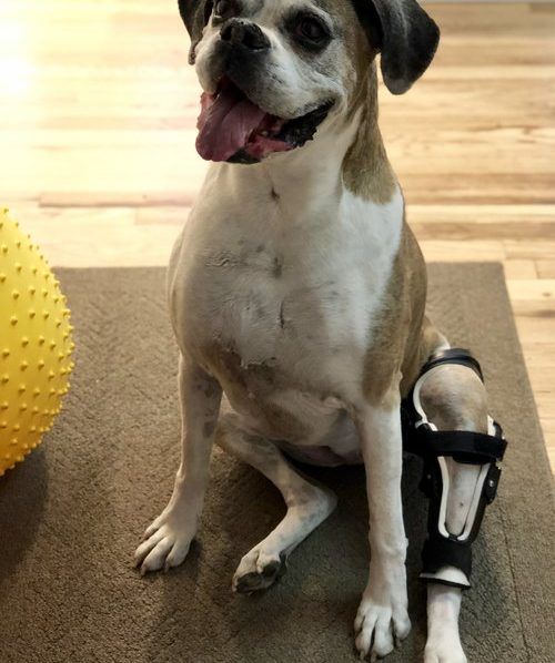 meniscus+injury